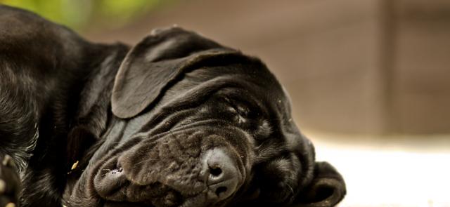Zioła wspomagające zasypianie. Część I: kozłek lekarski