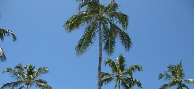 Wiórki kokosowe -  wartościowy składnik diety