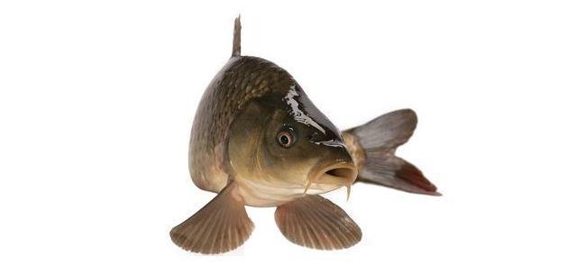 Ryba na sportowo w trzech odsłonach