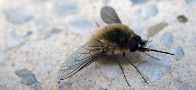 Niebezpieczne użądlenia owadów