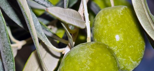 Czy oliwa z oliwek wspomaga odchudzanie?