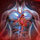 O przepływie krwi w trakcie treningu- mity i fakty