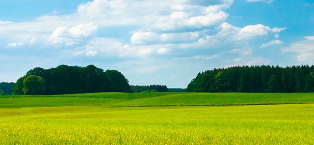 Grasski czyli narty na trawie