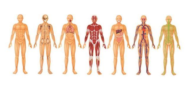 Skład ciała, a możliwości wysiłkowe