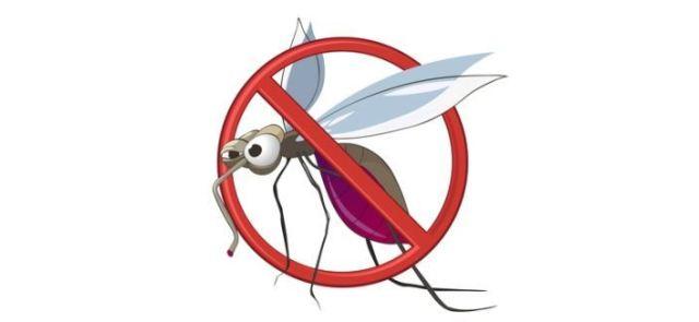 Jak odstraszyć komary?