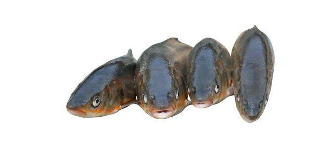 Ryby – jeść czy nie jeść ? Oto jest pytanie!