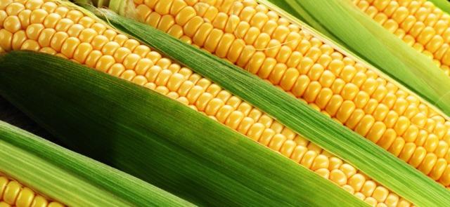 Na co komu maizena (maizeina)? Czyli kilka słów o popularnym dodatku do diety proteinowej