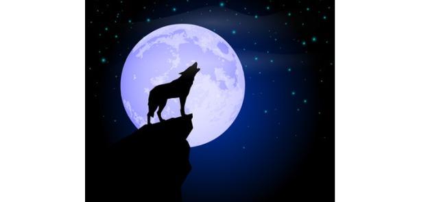 Jak wygrać z wilczym głodem?
