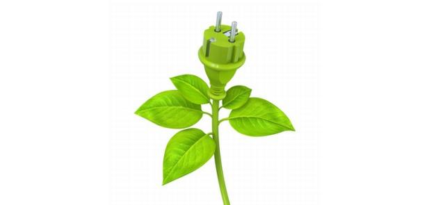 Anaboliki roślinne – czyżby alternatywa dla sterydów?