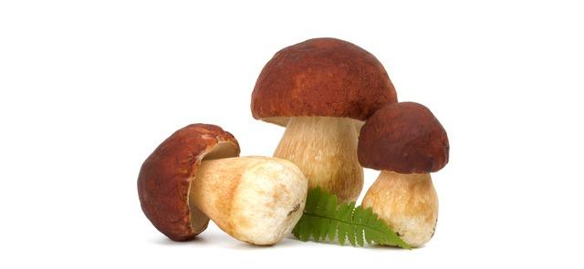 Wartości odżywcze grzybów