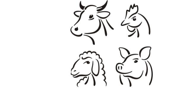 MOM, czyli mięso oddzielone mechanicznie – czym jest i dlaczego warto go unikać?