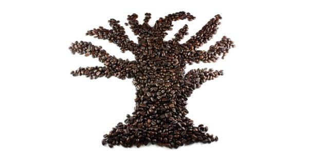 Kofeina, kawa – czyli o czym nigdy nie słyszałeś?
