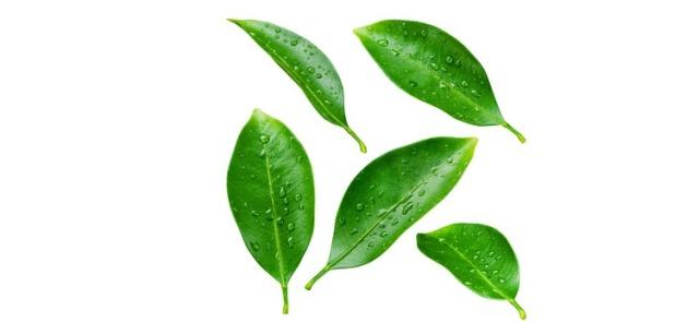 Interesujące właściwości herbaty ulung