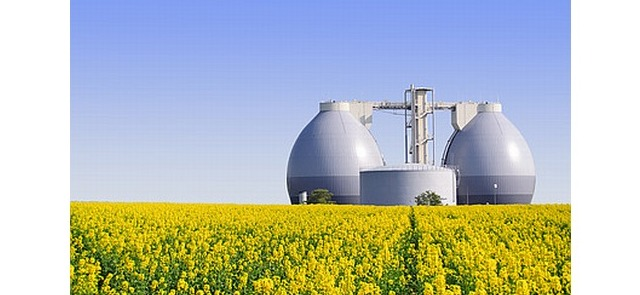 Cztery ciekawostki na temat oleju rzepakowego