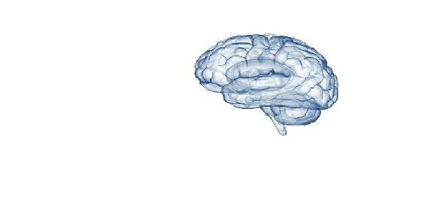 Węglowodany pomagają w utrzymaniu prawidłowego funkcjonowania mózgu