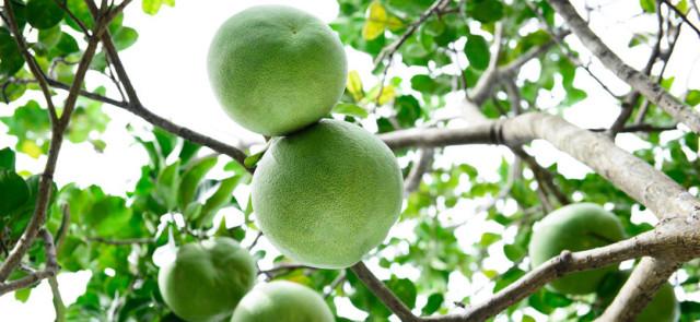 Cztery powody dla których warto jeść owoce cytrusowe