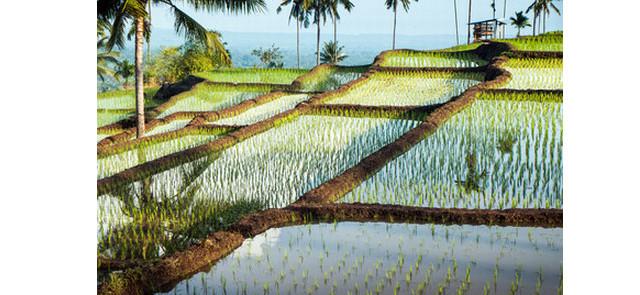 Co warto wiedzieć na temat ryżu?