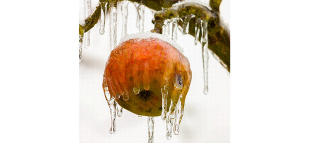 """""""Stres"""" podnosi wartość odżywczą warzyw i owoców"""