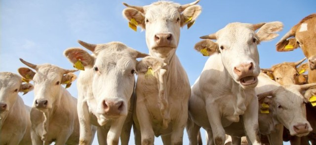 Czy pokarmy pochodzenia zwierzęcego mogą być źródłem pestycydów?