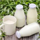 Czy to prawda, że mleko zakwasza organizm?
