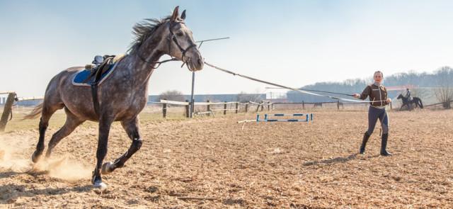 Czy warto wybrać jazdę konną?