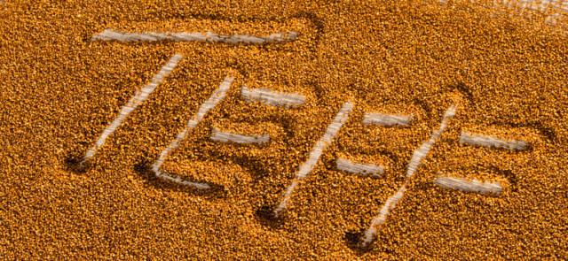 Miłka abisyńska – odżywcze pseudozboże