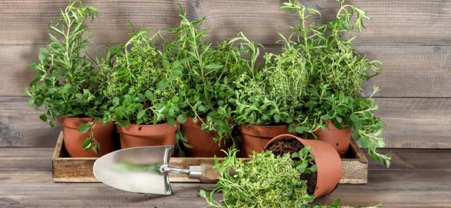 Jakie zioła warto uprawiać w swojej kuchni?