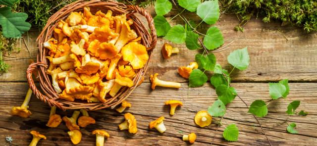 Grzyby – czy stanowią cenny składnik diety?
