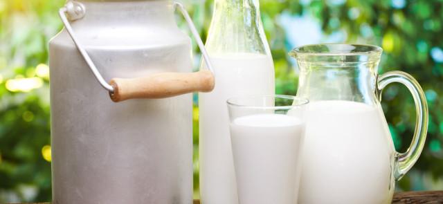 Czy mleko krowie może zaszkodzić?