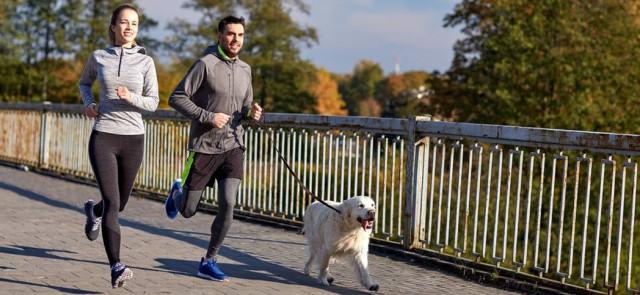Treningi, które możesz wykonywać ze swoim psem