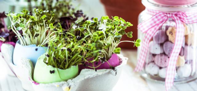 Mniej popularne warzywa o niezwykłych właściwościach zdrowotnych
