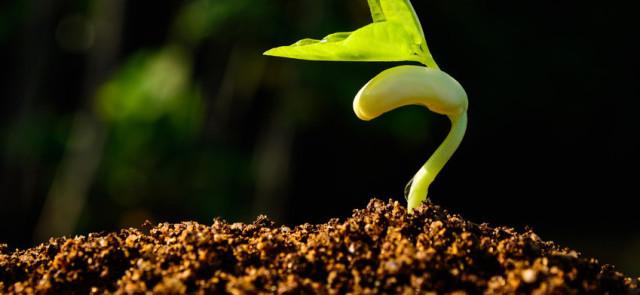 Surowe kiełki roślin mogą być niebezpieczne!
