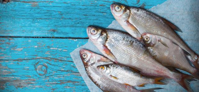 Czy ryby są zdrowe, których ryb nie jeść?