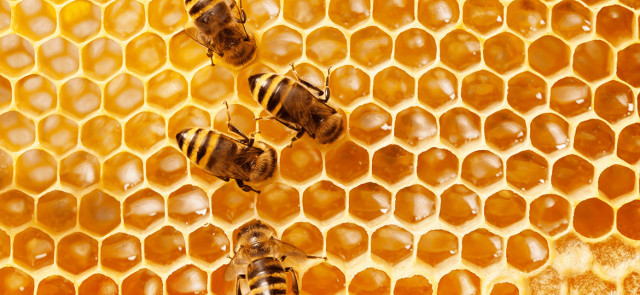 Mleczko pszczele - czym jest i jakdziała?