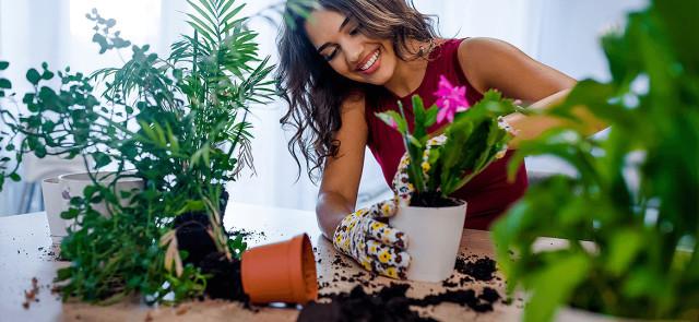 W jaki sposób rośliny wpływają na nasz nastrój i samopoczucie?