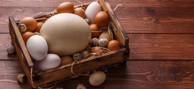Kurze, przepiórcze czy strusie? Które jajo wybrać?