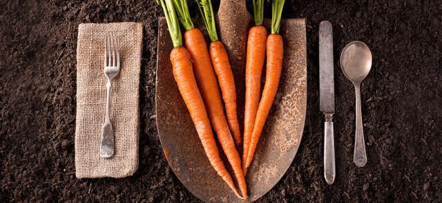 5 powodów, dla których warto jeść marchewkę