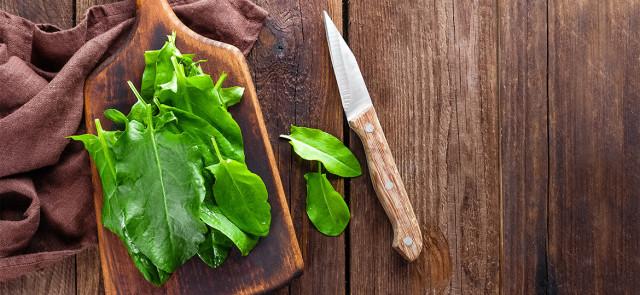 Czy szczaw jest zdrowy? Czy warto jeść szczaw?