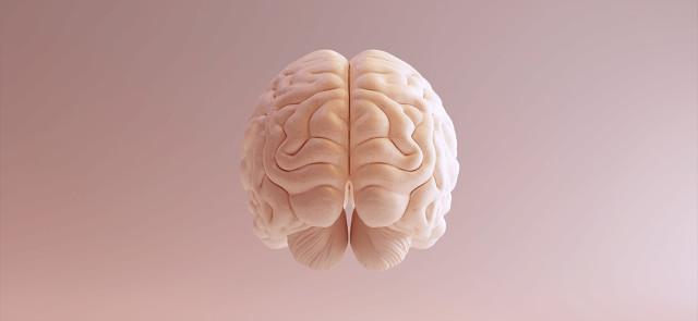 Alpha GPC – suplementacja dla mózgu